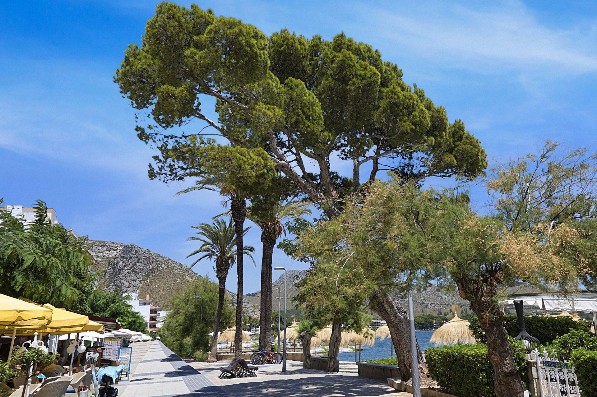 Pine Walk Porto De Pollenca
