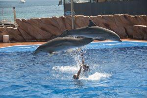 dolphins at marineland majorca