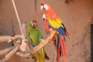 multi coloured parrots