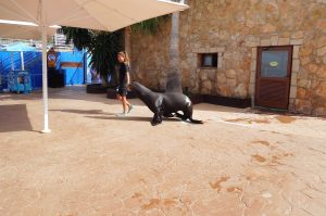 walking seal with trainer